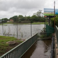 Frew Park, looking from the Western Creek Bridge on Milton Road, 28 January 2013.