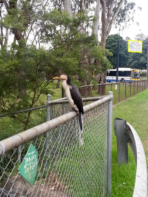 A waterbird sitting on the fence by the pond at the bottom of the Fernberg grounds