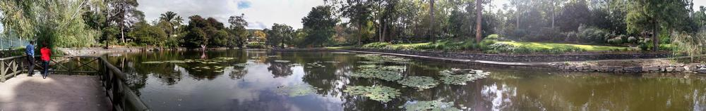 A panorama of the main lagoon at the Mount Coot-tha Botanic Gardens.