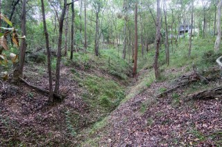 One of the gullies below the 'Treetops on Birdwood' estate.