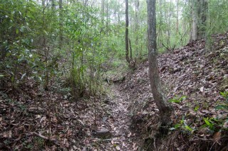 A dry channel at the bottom of a gully between Birdwood Terrace and Mount Coot-tha Road.