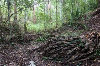 The bottom of a gully near Old Mount Coot-tha Road.