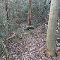 Part of an old campsite by a tributary of Cubberla Creek, Mount Coot-tha. This spot looked a bit like a grave.