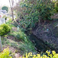 The creek before it disappears under Haining Street, downstream from the clearing