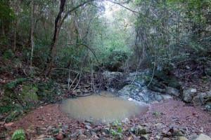 A pond in the Cubberla Creek tributary