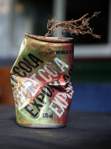 An Export Cola can in which a seed has taken root.