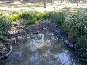 The pond at the bottom of the Fernberg grounds, 2 September, 2012.