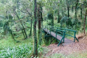 A bridge over a gully in the Fernberg grounds