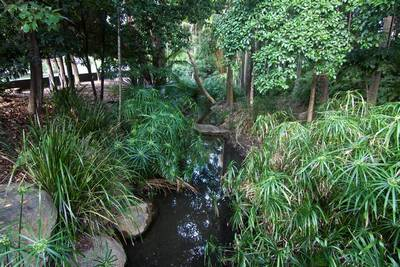 A stream running through the Mount Coot-tha Botanic Gardens, parallel with Mount Coot-tha Road.