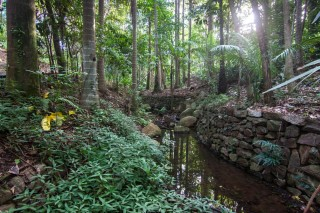 The stream closest to Mount Coot-tha Road is in parts lined with stone walls.