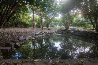A small dam at the top of one of the streams in the Mount Coot-tha Botanic Gardens