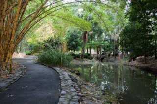 The upstream part of the main lagoon at the Mount Coot-tha Gardens.