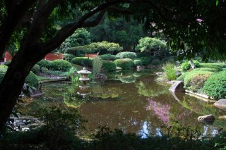 A pond in the Japanese Gardens.