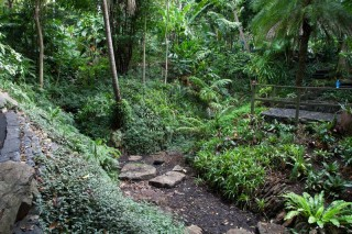 A damp streambed running through the exotic rainforest section.