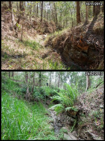 Contrasting conditions at the same location along a tributary in the headwaters of Ithaca Creek, in Mount Coot-tha forest.