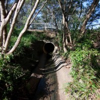 A drain pit in Norman Buchan Park