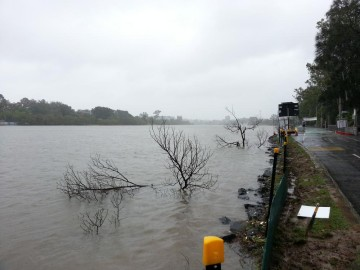 The Brisbane River just near Lang Parade, 27 January 2013.