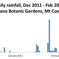 Daily rainfall at the Mt Coot-tha Botanic Gardens, December 2011 to February 2012. (Bureau of Meteorology, Climate Data Online)