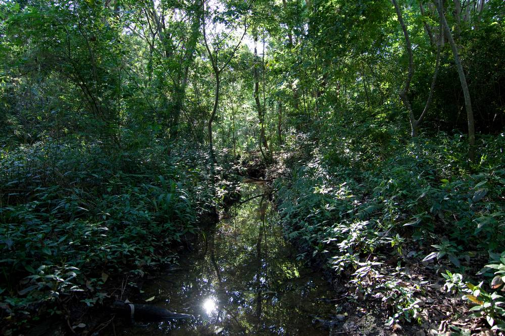A stream in the Weedy Wonderland after rain in October 2011