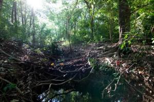 Weedy Wonderland stream