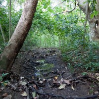 A channel in the Birdwood branch of the Weedy Wonderland (October 2011)