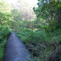 The sewage pipe crossing through a clearing