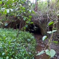 The culvert under Tristania Drive